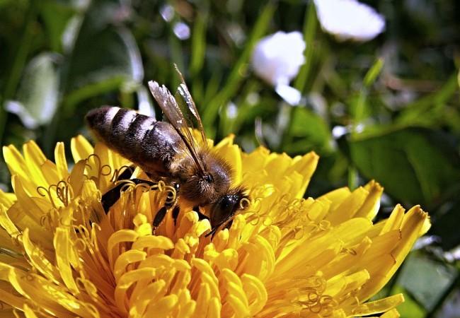 Ohlédnutí za včelařským rokem 2014/15