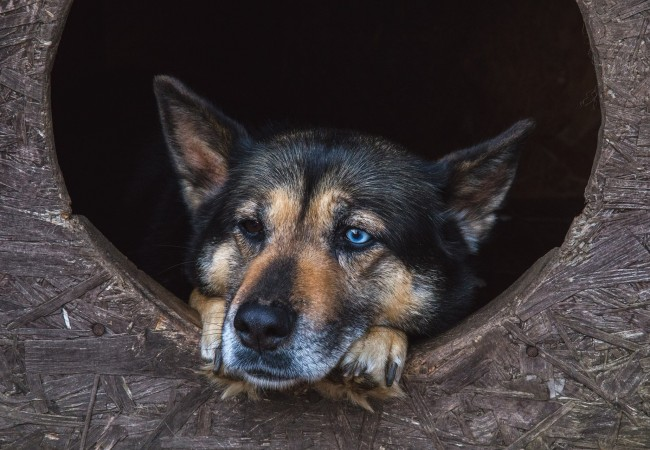 Sbírka pro zvířátka v nouzi