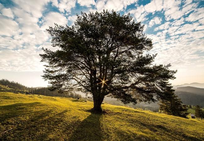 Významné stromy naštěpánovickém katastru