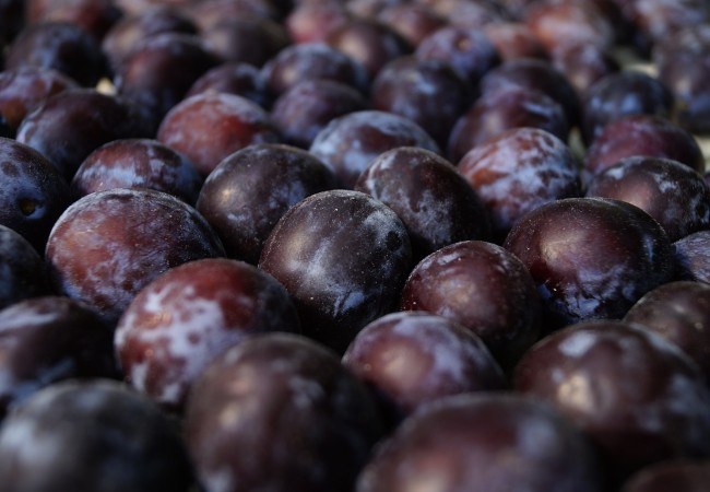 V lisovně bylo zpracováno přes dvacet tun ovoce