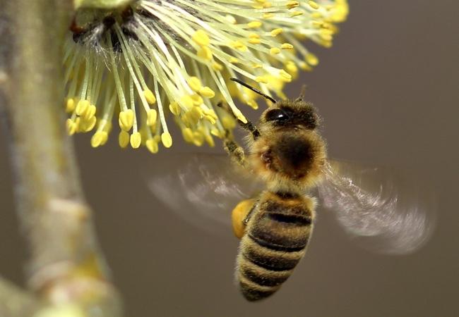 Osobnost a včelař