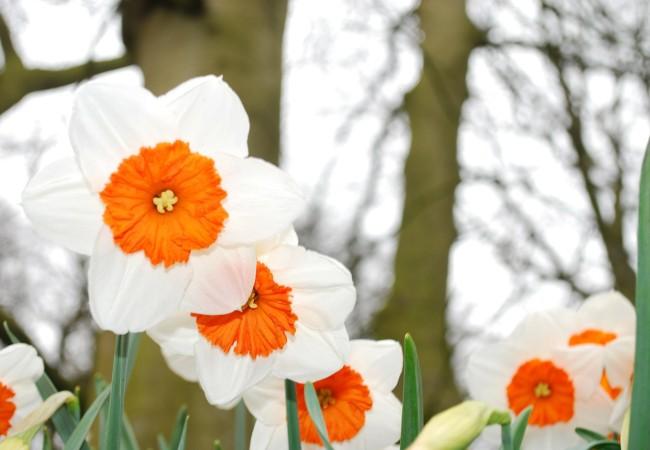 Pozvánka na Jarní dílny – Tvoření Luka a Inspiro