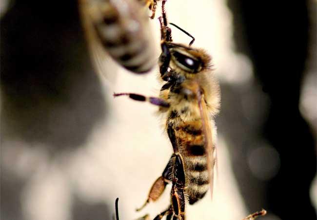 Za strach ze včel se není třeba stydět