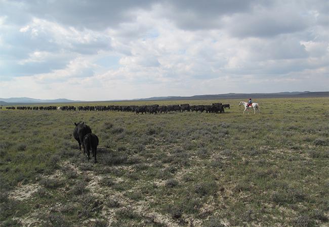 Život na ranči v prérii