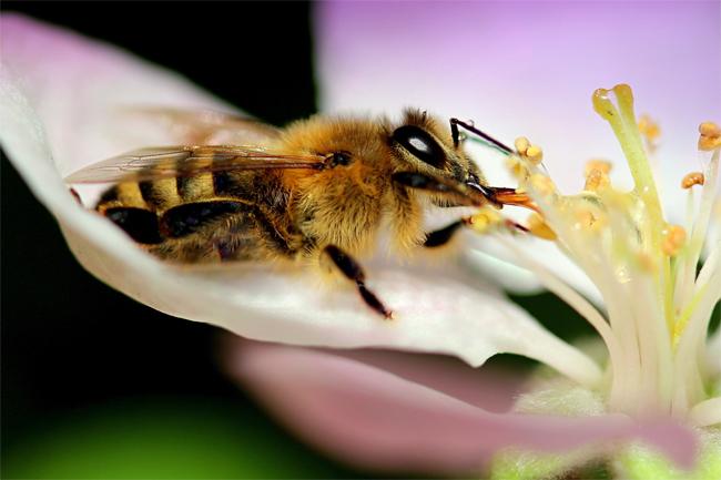 Včely a věrnost