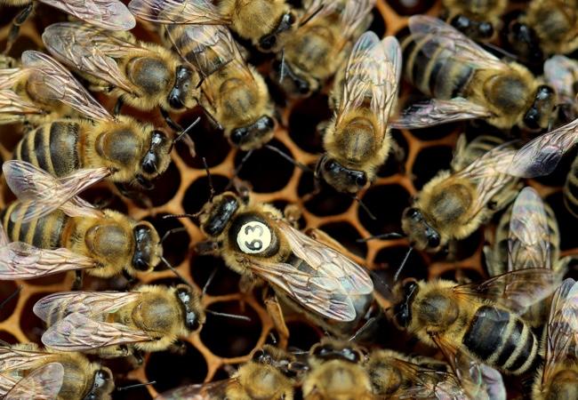 Ohlédnutí za včelařským rokem 2015–2016