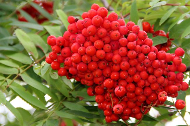 Plody podzimu a zdroj vitamínů