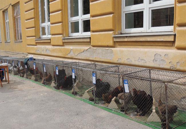 Ohlédnutí za výstavou chovatelů drobných zvířat