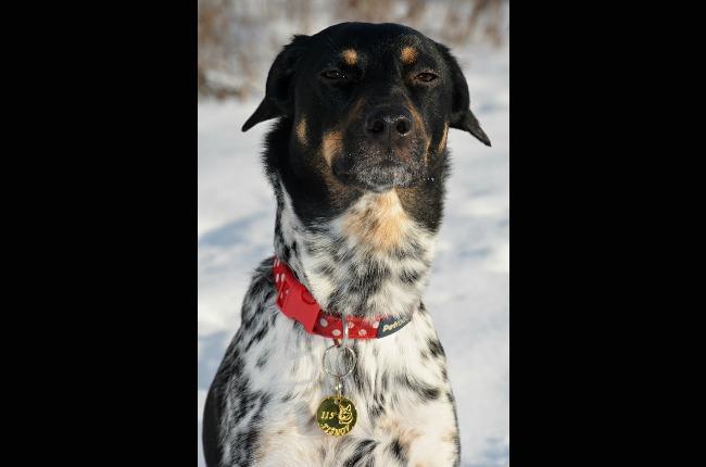 Snížení poplatku ze psů a zavedení povinných známek