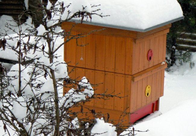 Zima na včelnici