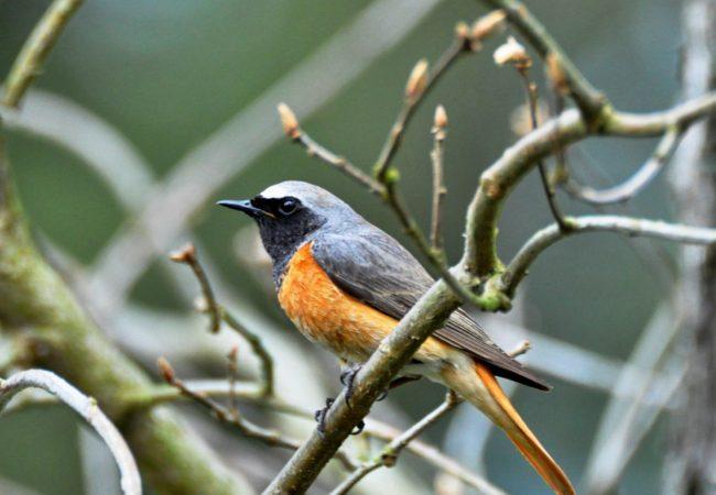 Vracejí se stěhovaví ptáci