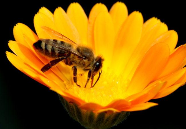 Ohlédnutí za včelařským rokem 2016/17