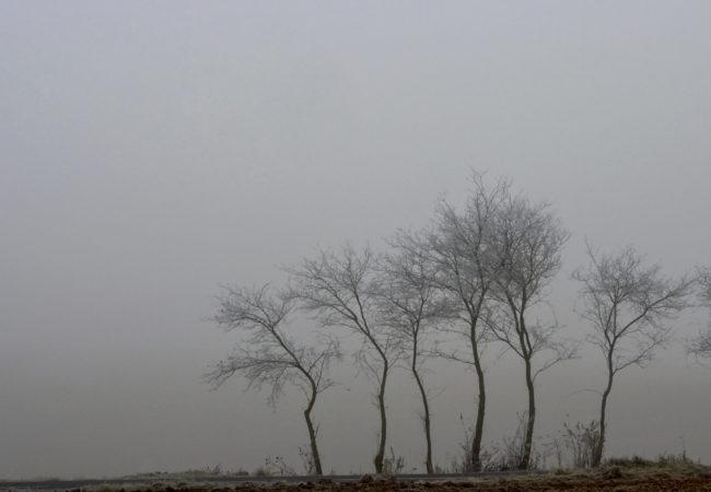 Horizonty mlhy
