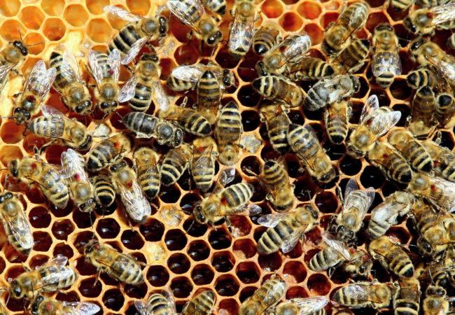 Důležitý mezník v životě včel