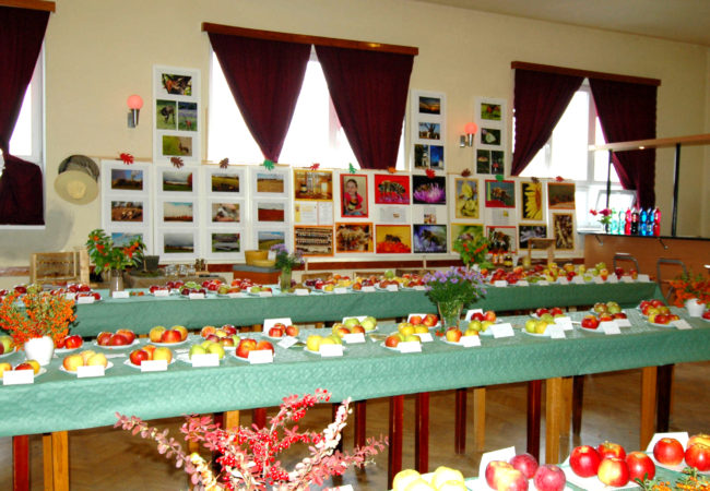 VHajánkách vystaví nejen ovoce a zeleninu