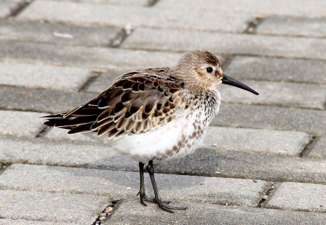 Tažní ptáci na Tišnovsku
