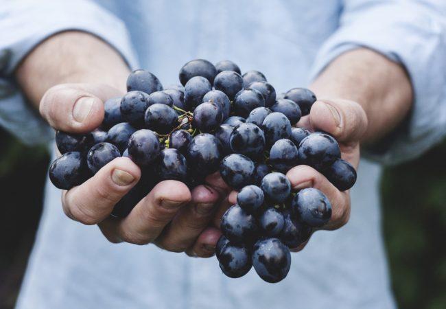Seminář Chrání místní potraviny přírodu?