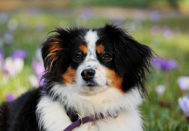 Poplatky za psy a odpad do 30. dubna