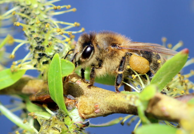 Včely pojarním slunovratu