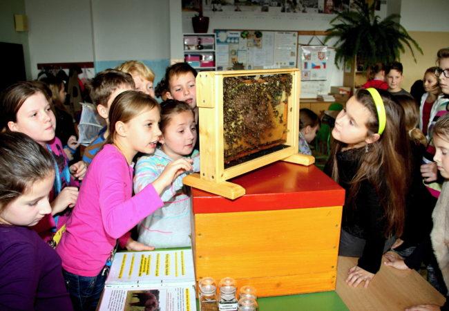 Tanec včel jako jeden prvek dorozumívání společenství