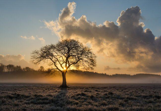 Stromy naTišnovsku 2020 – kalendář právě vychází