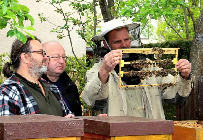 Ohlédnutí za včelařskou sezónou
