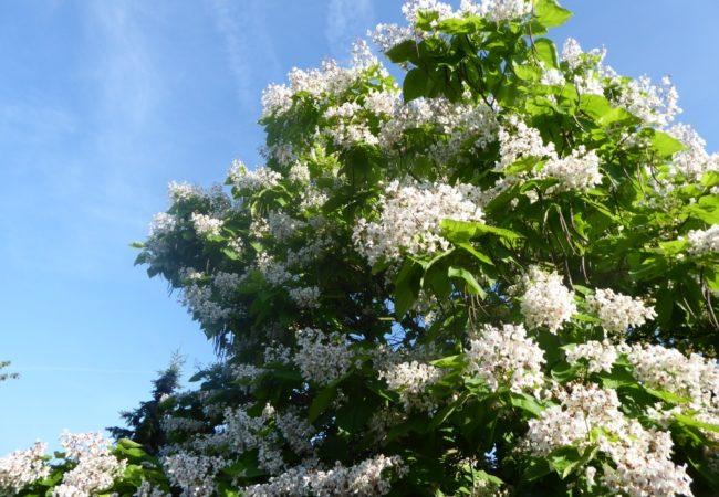 Soutěž o nejkrásnější stromy, květinové předzahrádky a balkony