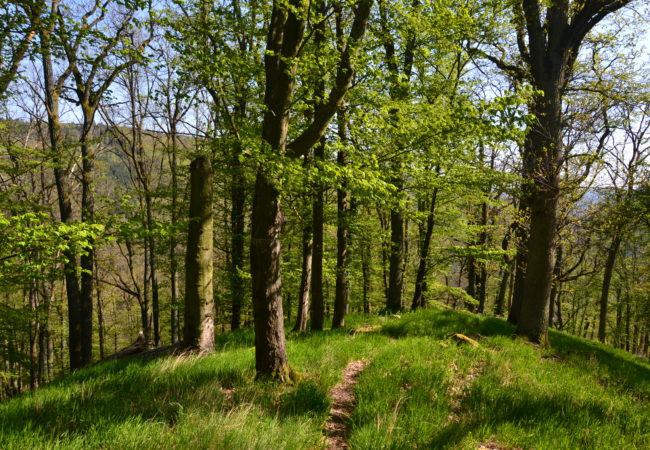 Kam dozeleného království – Výpravy do lesa
