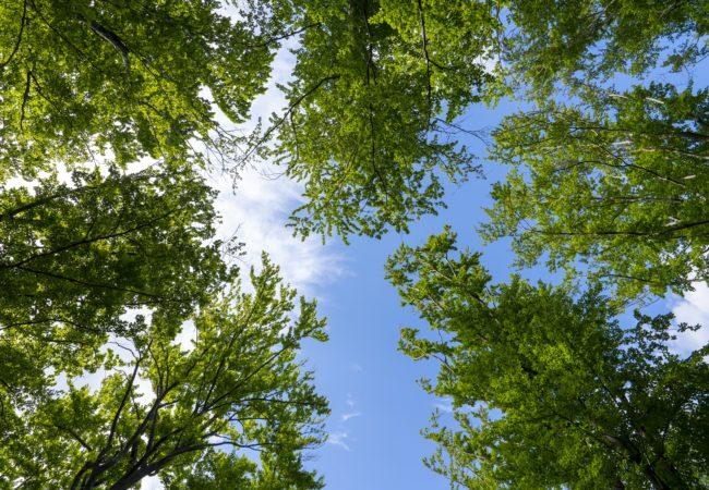 Posuzování bezpečnosti stromů