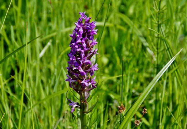 Květinové hodiny Tišnovska: Na české orchideje – vstavače