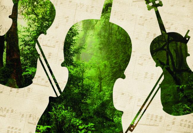 Najdi si svůj koncert aneb jak zní hudba vtichu lesa