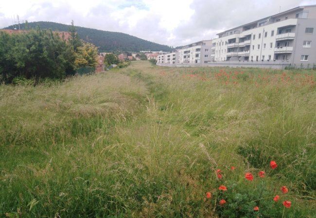 Park Hony za Kukýrnou