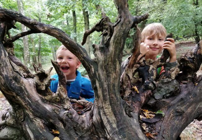 Lesní Montessori mateřská školka Ledňáček