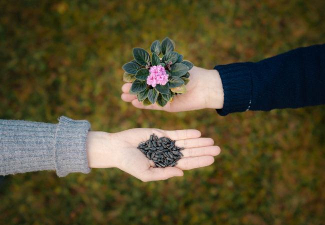 Květinový SWAP vTišnově