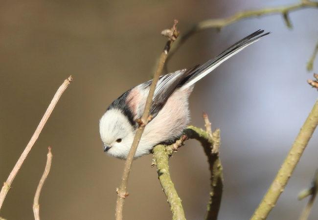 Nenápadný čilý malý ptáček